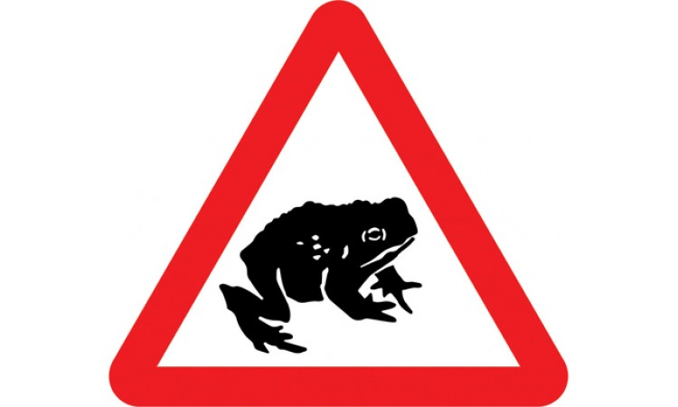 Migratory toad crossing ahead
